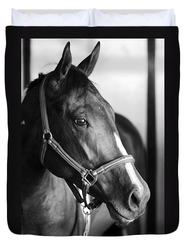 Horse Duvet Cover featuring the photograph Horse And Stillness by Marilyn Hunt