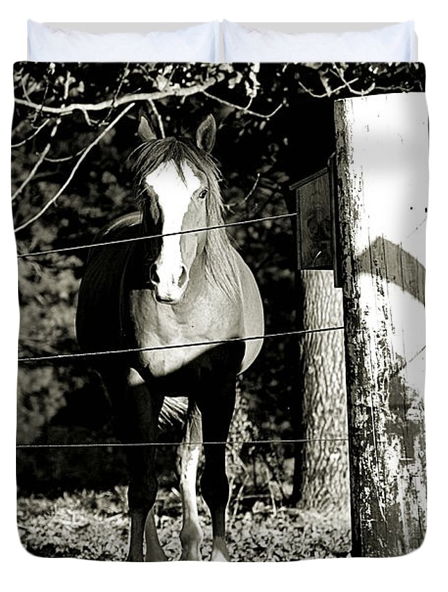 Horses Duvet Cover featuring the photograph Stopping For A Pose - Southern Indiana by Scott D Van Osdol