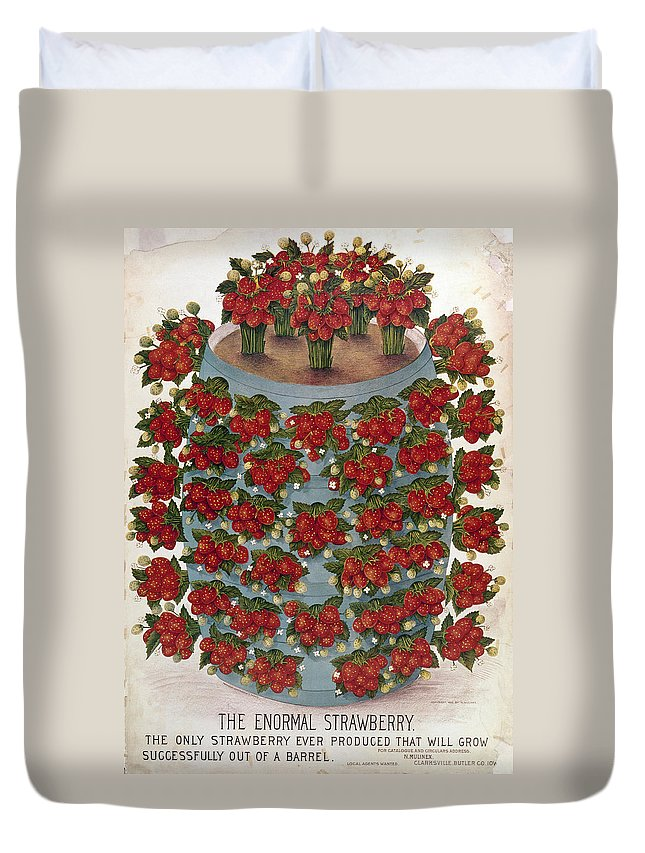 1889 Duvet Cover featuring the photograph Strawberries, 1889 by Granger