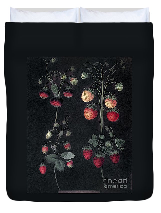 1812 Duvet Cover featuring the photograph Strawberries by Granger