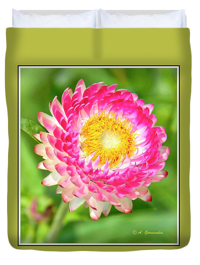 Garden Duvet Cover featuring the photograph Strawflower by A Gurmankin