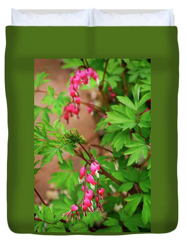 Flower Duvet Cover featuring the photograph String Of Bleeding Hearts by Marilyn Hunt