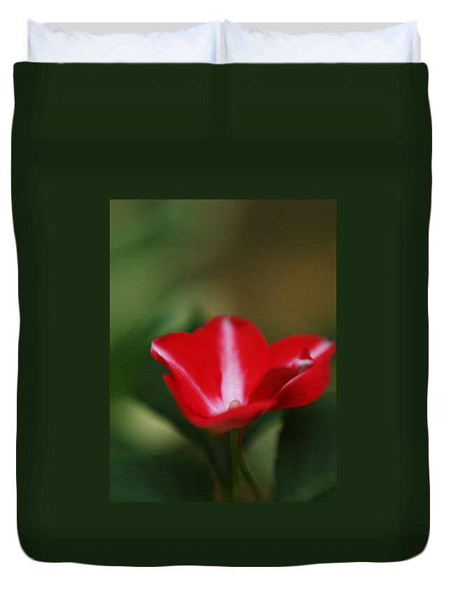 Flowers Duvet Cover featuring the photograph Striped Impatien In The Garden Shadows by Dorothy Lee