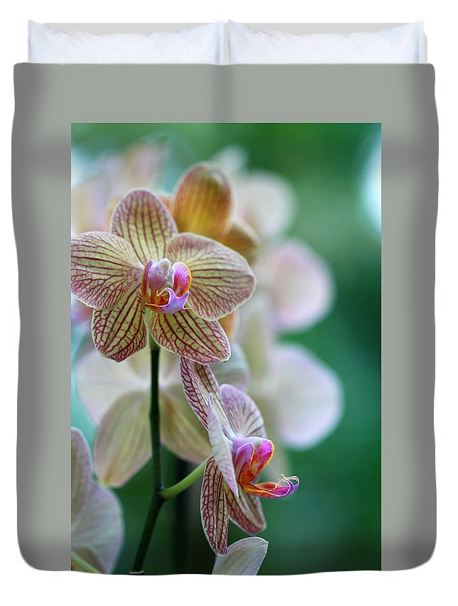 Orchid Duvet Cover featuring the photograph Striped Orchid 1 by Kristina Jones