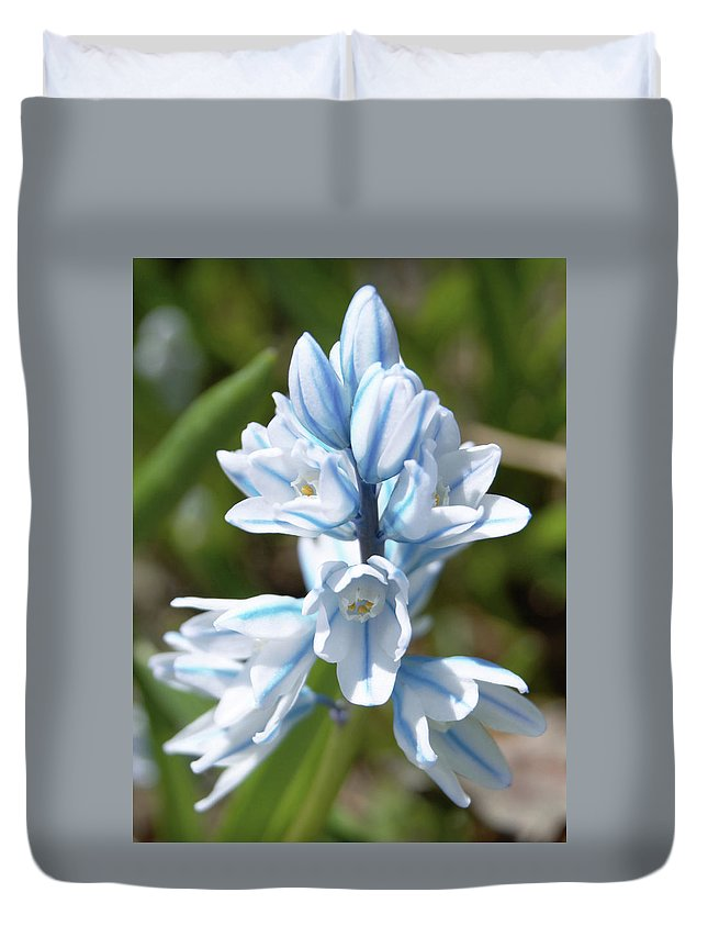 Flower Duvet Cover featuring the photograph Striped Squill Emerging by Karen Sturgill