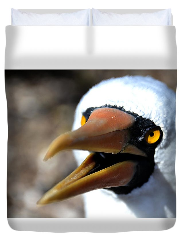 Galapagos Duvet Cover featuring the photograph Stunning Nazca Booby by Harry Coburn