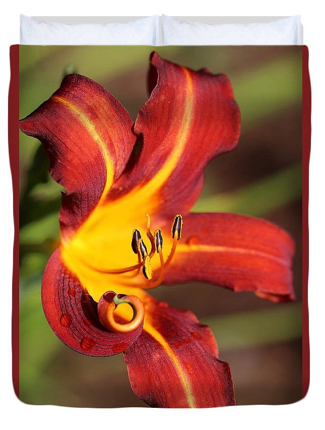 Daylily Curl Duvet Cover featuring the photograph Stylistic Daylily by Tammy Pool