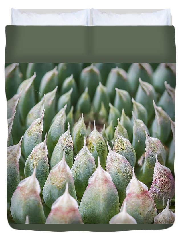 Colorado Duvet Cover featuring the photograph Succulant Spikes by Ashley M Conger