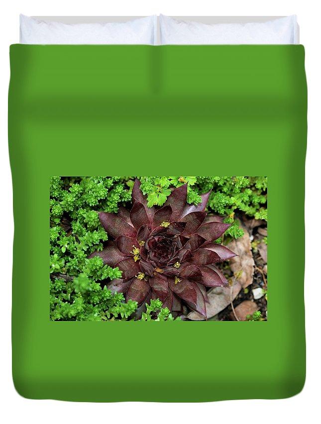 Nature Duvet Cover featuring the photograph Succulent 4 by Kristina Jones