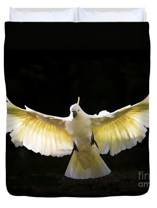 Sulphur Crested Cockatoo Australian Wildlife Duvet Cover featuring the photograph Sulphur Crested Cockatoo In Flight by Avalon Fine Art Photography