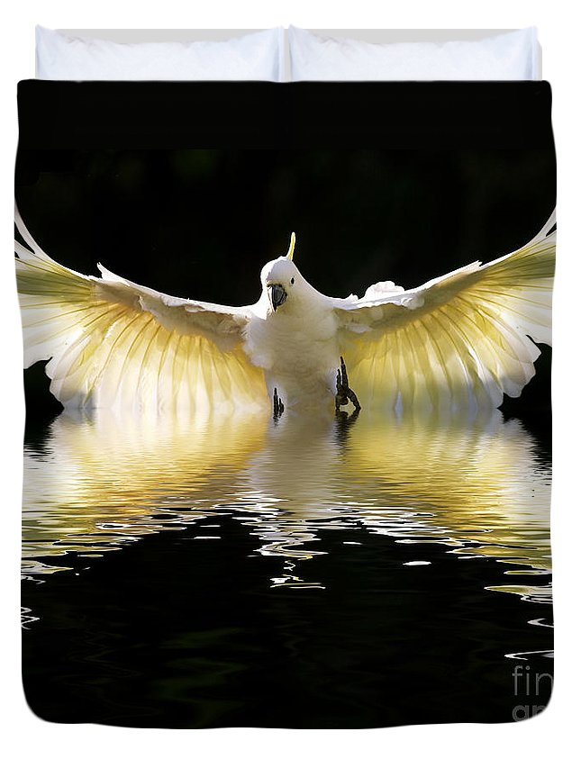 Bird In Flight Duvet Cover featuring the photograph Sulphur Crested Cockatoo Rising by Sheila Smart Fine Art Photography