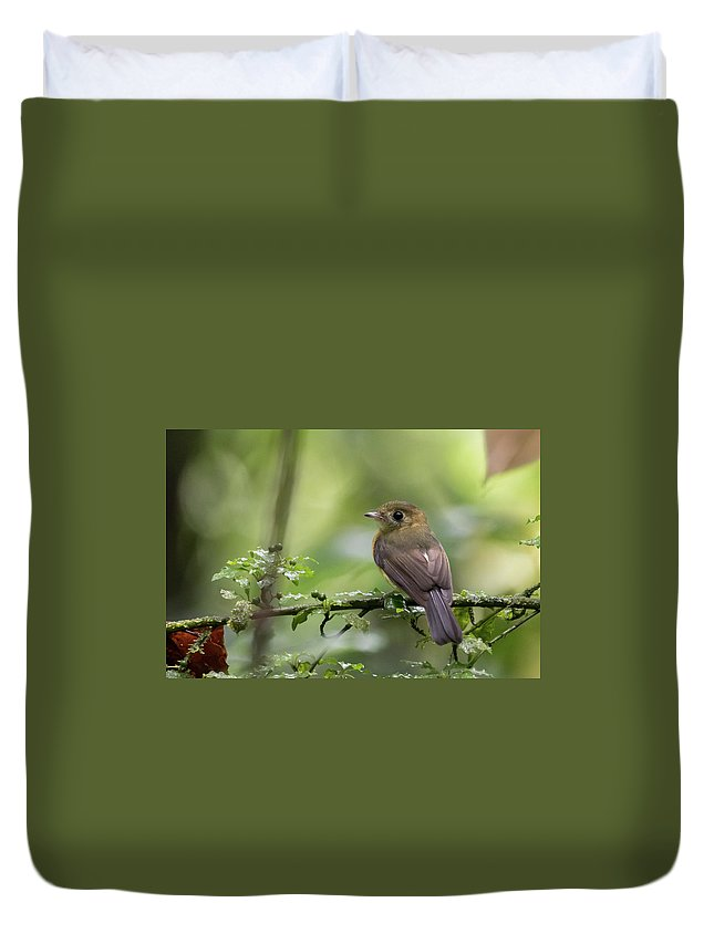 Costa Rica Duvet Cover featuring the photograph Sulphur-rumped Flycatcher by Mike Timmons