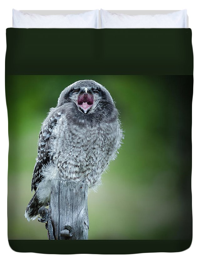 Sulten Ugle Duvet Cover featuring the photograph Sulten by Roy Haakon Friskilae