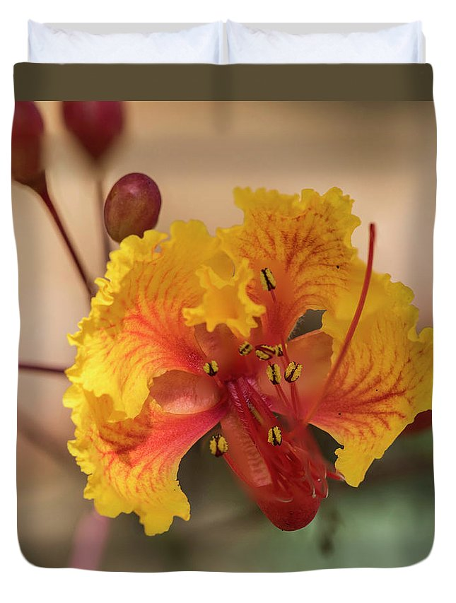 Summer Duvet Cover featuring the photograph Summer Flower by Kevin McCollum