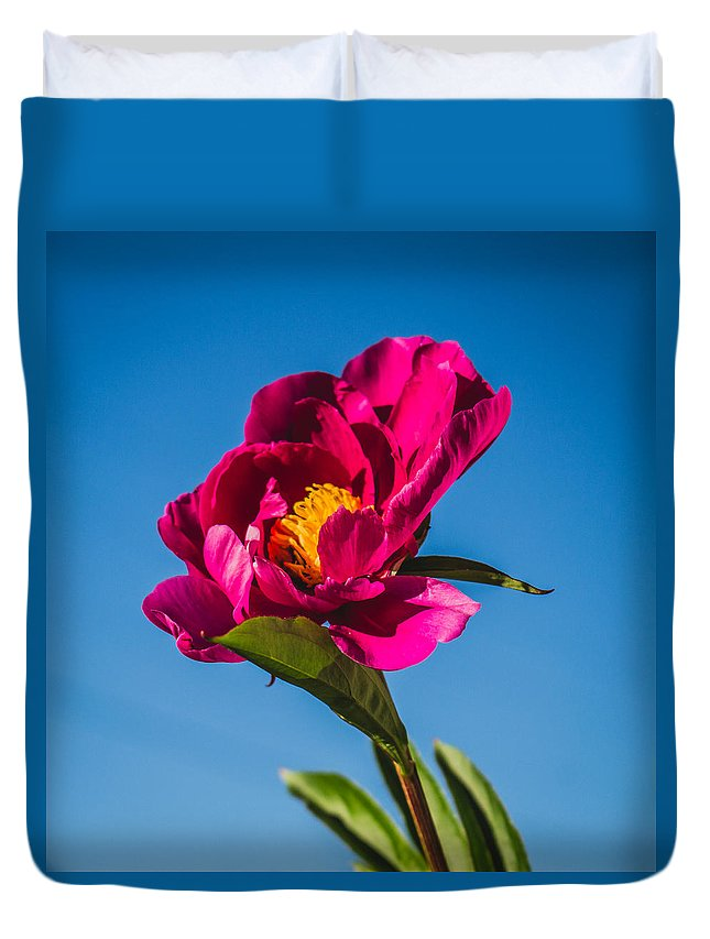 Flowers Duvet Cover featuring the photograph Summer Flower by Tammy Bryant