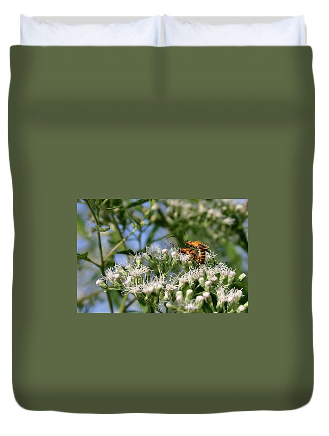 Beetle Duvet Cover featuring the photograph Summer Lovin by Kristin Elmquist
