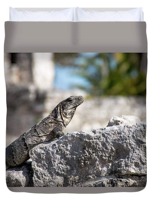 Iguana Duvet Cover featuring the photograph Sun Bathe by Caton Oswalt