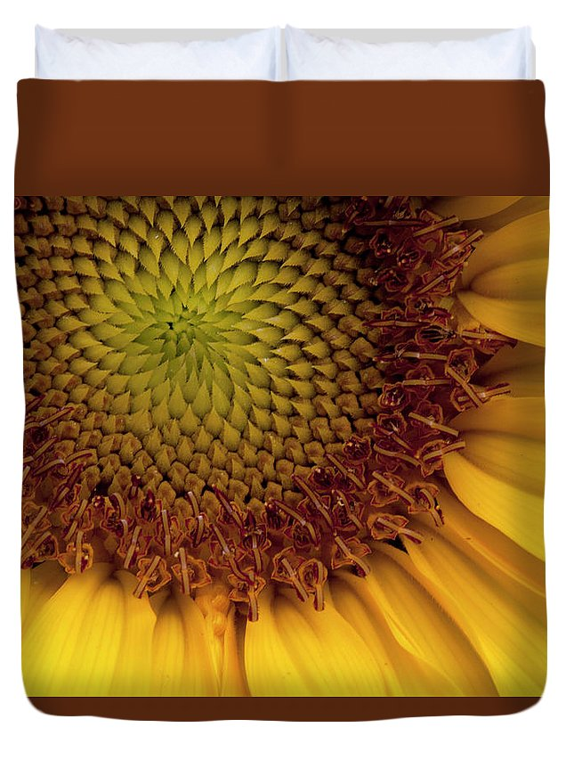 Sunflower Duvet Cover featuring the photograph Sun Flower by George Sanquist