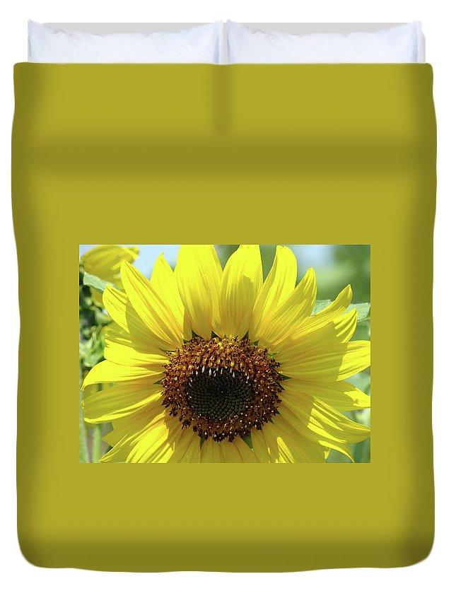 Sunflower Duvet Cover featuring the photograph Sun Flower Glow Art Print Summer Sunflowers Baslee Troutman by Baslee Troutman