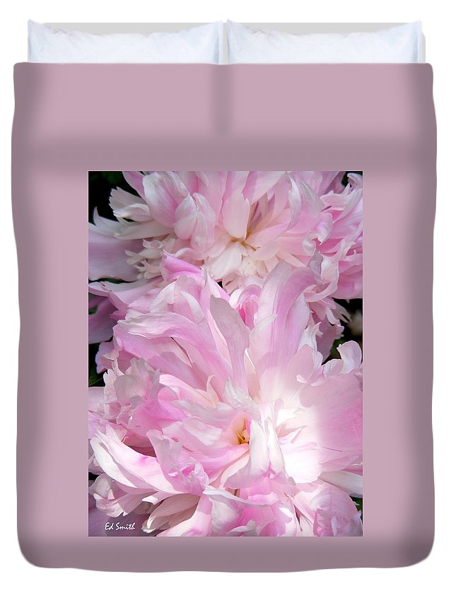 Sun Lit Peonies Duvet Cover featuring the photograph Sun Lit Peonies by Ed Smith
