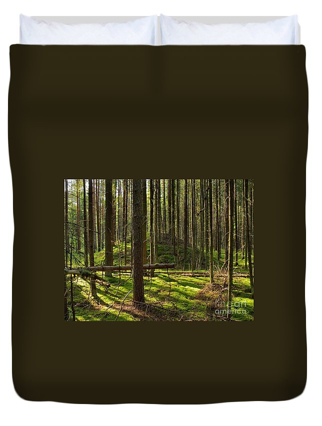 Ancient Duvet Cover featuring the photograph Sun Rays In Forest by Vadzim Kandratsenkau
