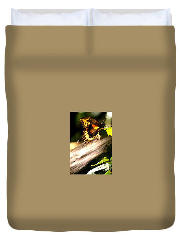 Butterfly Duvet Cover featuring the photograph Sunbathing Butterfly by Karen King