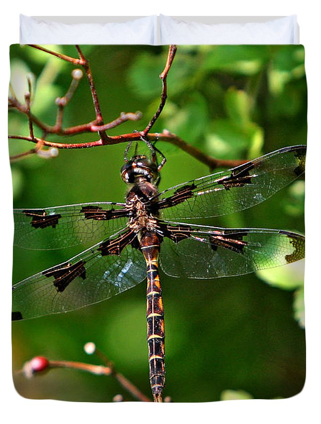 Dragonfly Duvet Cover featuring the photograph Sunbathing by Marle Nopardi