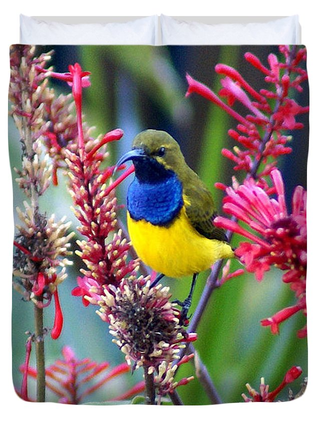 Animals Duvet Cover featuring the photograph Sunbird by Holly Kempe