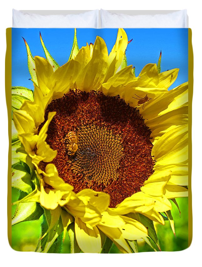 Pastoral Duvet Cover featuring the photograph Sunflower And Bee by Heather Coen