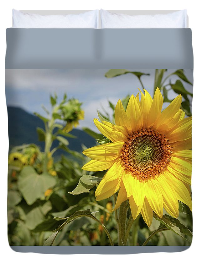 Blue Ridge Duvet Cover featuring the photograph Sunflower And Peaks Of Otter by MotionOne Studios