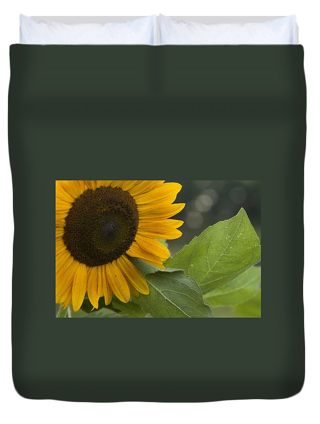 Flower Nature Farm Yellow Bright Sunflower Green Leaf Leaves Close Garden Organic Happy Duvet Cover featuring the photograph Sunflower by Andrei Shliakhau