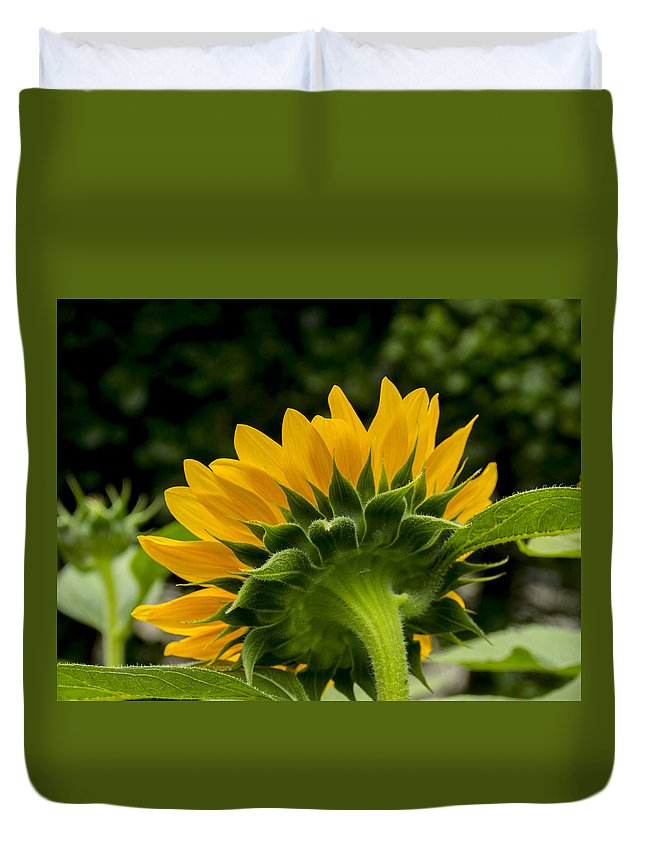 Flower Duvet Cover featuring the photograph Sunflower Back by Allen Nice-Webb