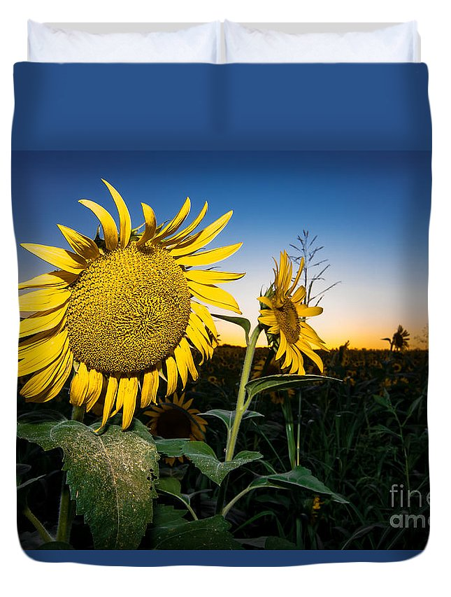 Nature Duvet Cover featuring the photograph Sunflower Evening by Robert Frederick