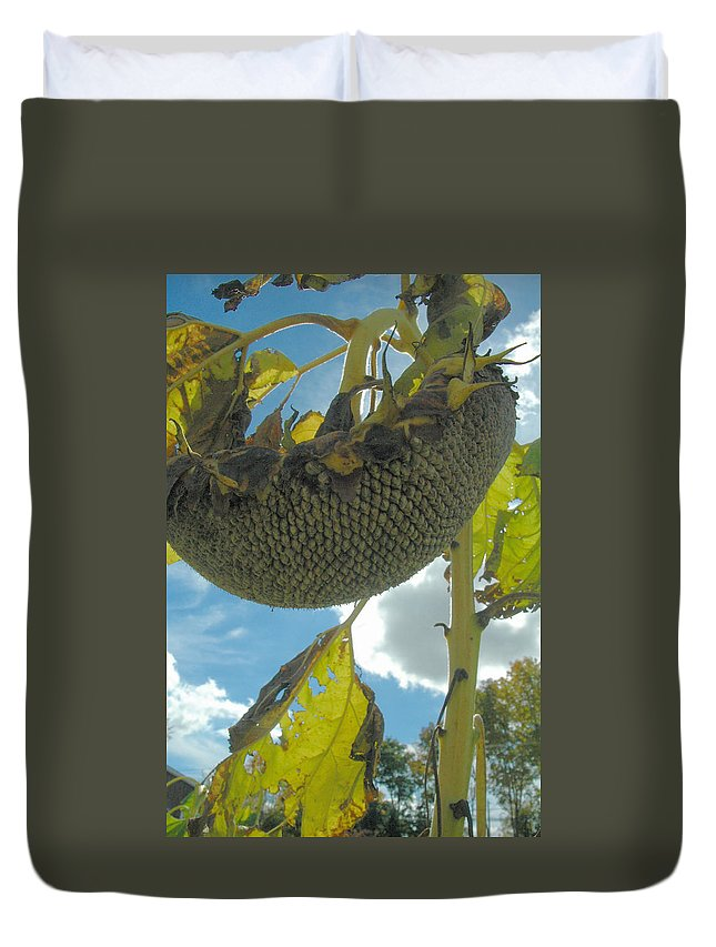 Sunflower Duvet Cover featuring the photograph Sunflower Seeds by Trish Hale