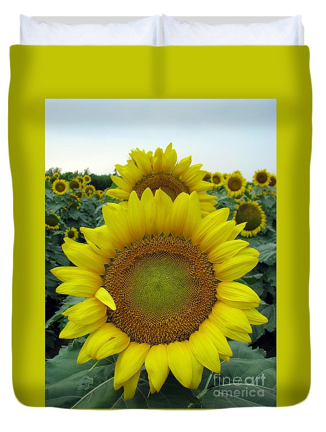 Sunflowers Duvet Cover featuring the photograph Sunflowers by Amanda Barcon