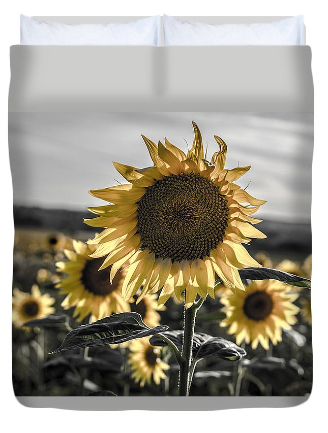 Sunflowers Duvet Cover featuring the photograph Sunflowers by On Off