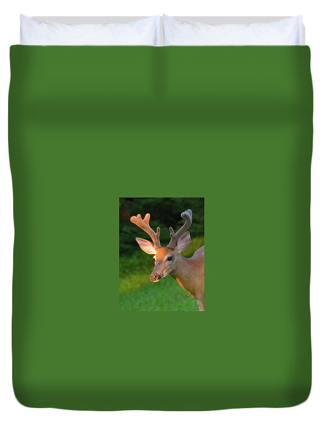 Buck Duvet Cover featuring the photograph Sunkissed Buck by Christine Dekkers