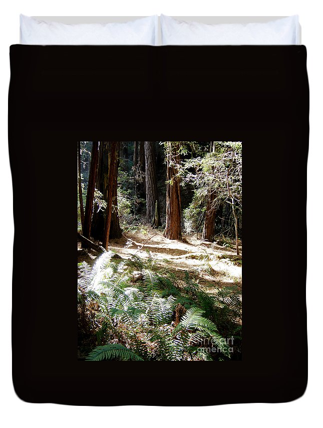 Sunlight Duvet Cover featuring the photograph Sunlight On Path by Mary Rogers