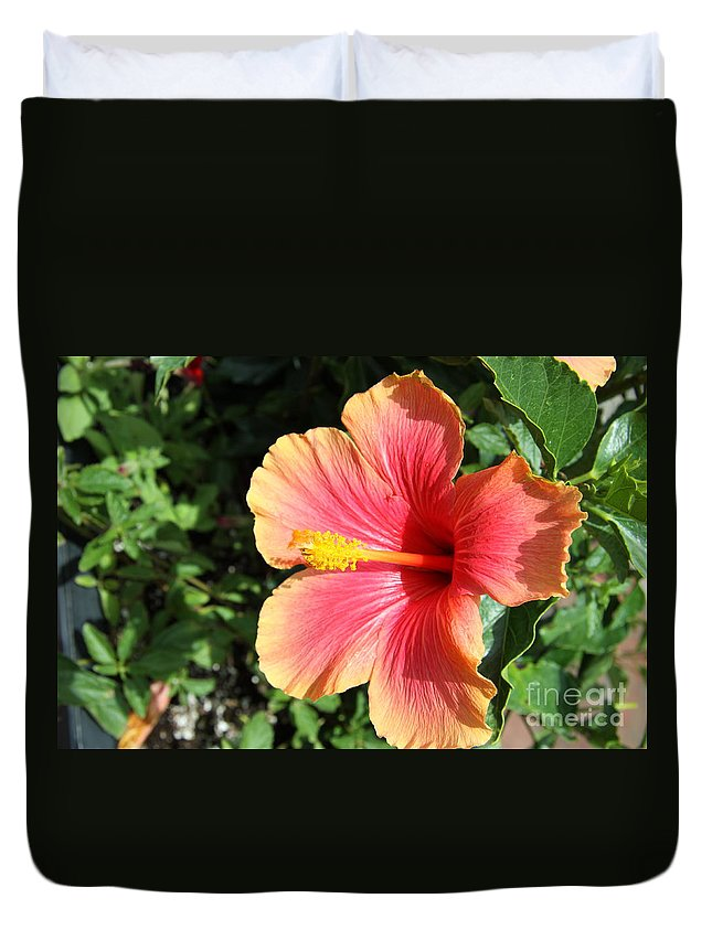 Hibiscus Duvet Cover featuring the photograph Sunlit Beauty by Christiane Schulze Art And Photography