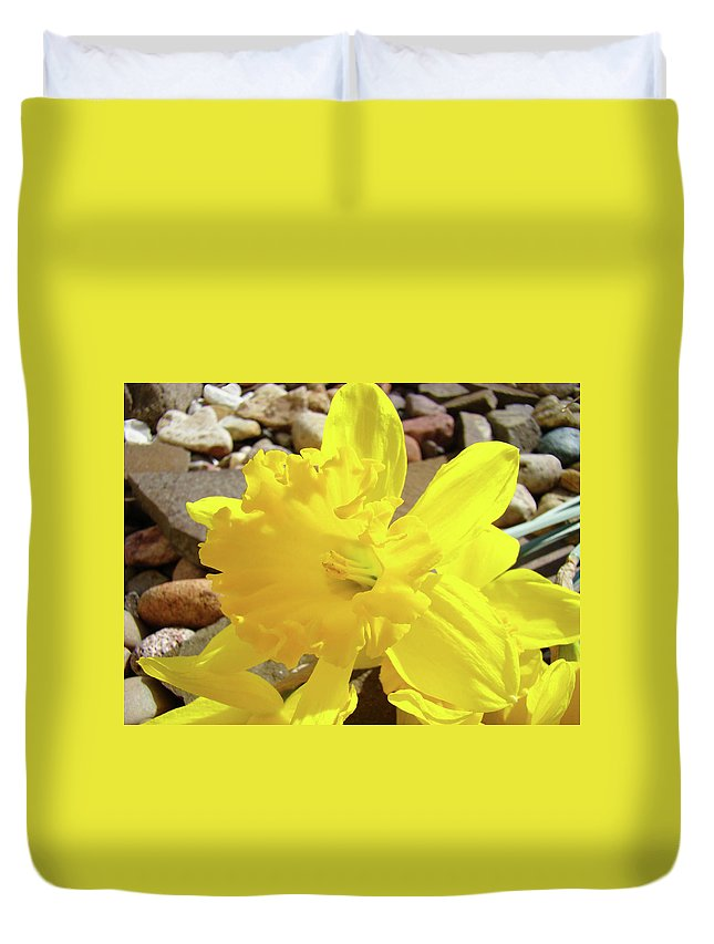 Spring Duvet Cover featuring the photograph Sunlit Daffodil Flower Spring Rock Garden Baslee Troutman by Baslee Troutman