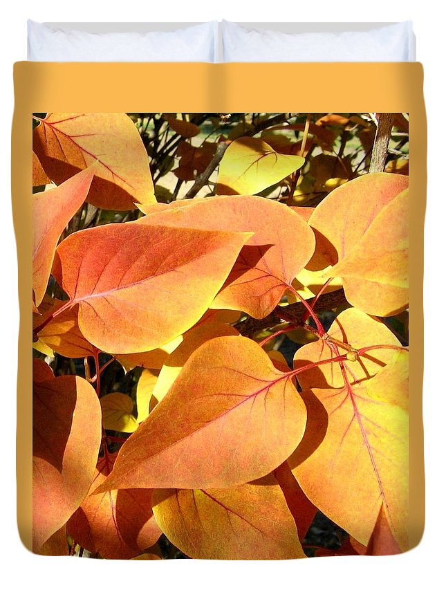Autumn Duvet Cover featuring the photograph Sunlit Fall Lilac by Will Borden