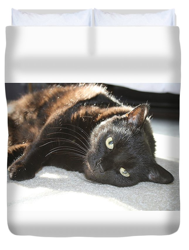 Black Cat Duvet Cover featuring the photograph Sunning Black Cat by Brad Nellis