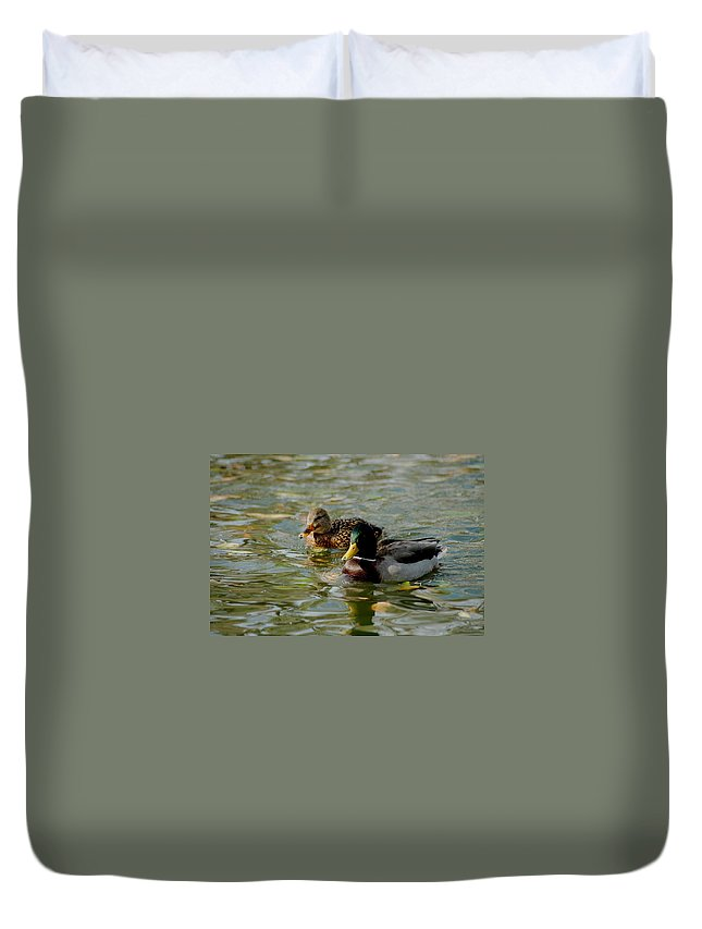 Nature Duvet Cover featuring the photograph Sunny Mallard Ducks by D Nigon