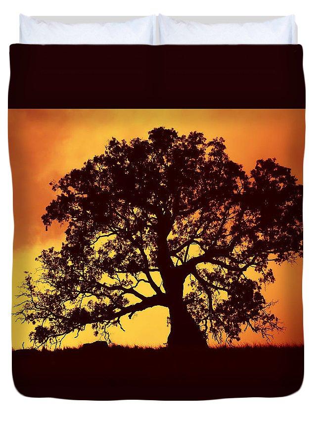 Gum Tree Duvet Cover featuring the photograph Sunrise Gum by Mike Dawson