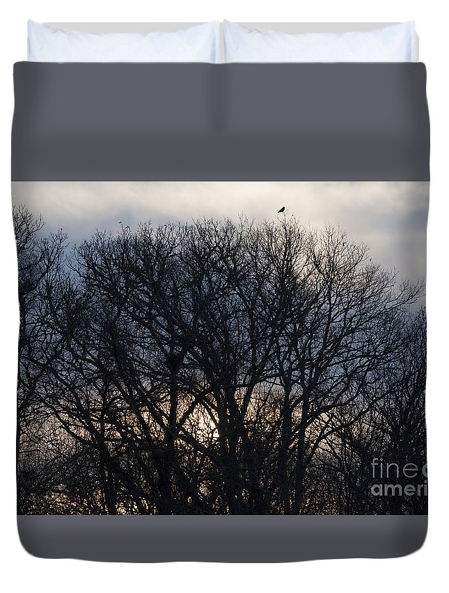Of A Horsenatanson Duvet Cover featuring the photograph Sunrise With Bird by Steven Natanson