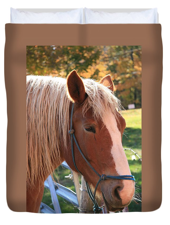 Horse Duvet Cover featuring the photograph Sunshine by Denise Adams
