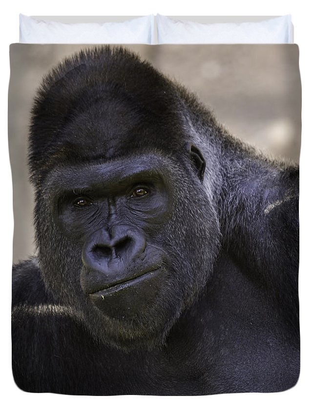 Gorilla Duvet Cover featuring the photograph Sup? by Terry Meek