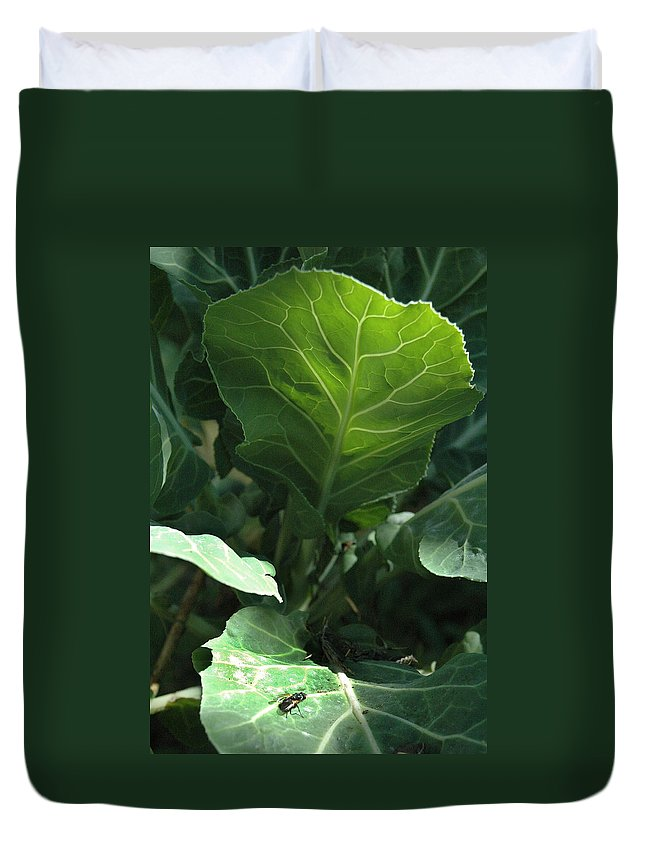 Cabbage Duvet Cover featuring the photograph Super-fly Cabbage by Trish Hale