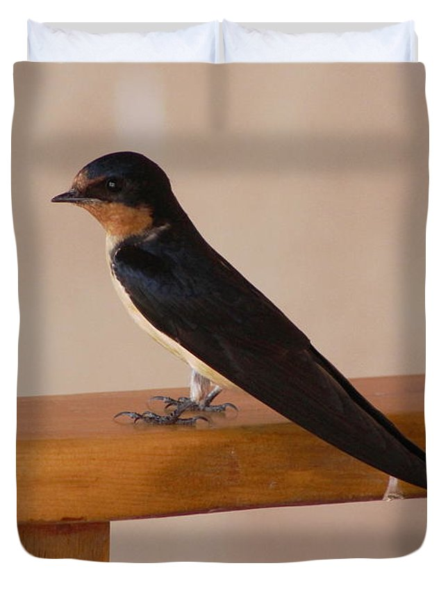Swallow Duvet Cover featuring the photograph Swallow on Bench by Colleen Cornelius