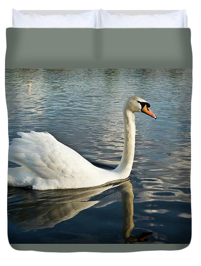 Cygnus Duvet Cover featuring the photograph Swan On The Run by Douglas Barnett